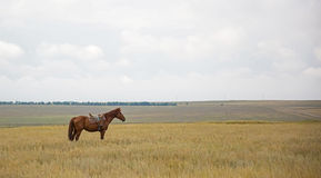 Lonely horse Stock Images