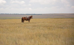 Lonely horse Stock Photo