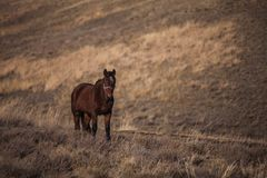 Lonely horse walk on a hillside Stock Images