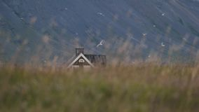 A lonely house is seen through the swaying grass. Andreev. A lonely house is seen through the swaying grass. A brown one-storey house on the beach in Iceland stock video footage