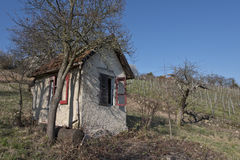 Lonely hut in vineyard Royalty Free Stock Photography
