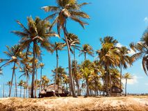 Lonely island , small tropical palm tree island - travel destina. Tion Stock Images