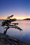 Lonely juniper tree at sunset Royalty Free Stock Photo