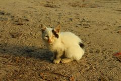 Lonely kitten. Kitty tired and hungry Royalty Free Stock Photo
