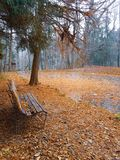 Lonely by the lake. Empty lonely bench by a frozen lake royalty free stock photography