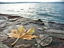 Lonely leaf. On the beach, fall Stock Photos