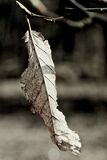 Lonely leaf Royalty Free Stock Images