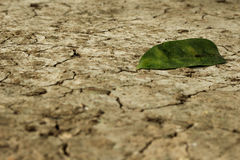 Lonely leaf on arid ground Stock Photography