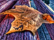 Lonely leaf. Autumn forgot her leaf on the bench Stock Photography