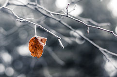 Lonely leaf Royalty Free Stock Image