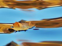 A lonely leaf on the water in the reflected sky royalty free stock image