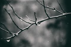 Lonely leafless tree branches with drops of water after a Novem. Beautiful lonely leafless tree branches with drops of water after a November cold rain stock images