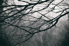 Lonely leafless tree branches with drops of water after a Novem. Beautiful lonely leafless tree branches with drops of water after a November cold rain stock photos