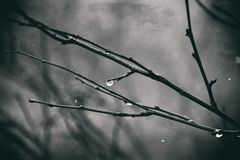 Lonely leafless tree branches with drops of water after a Novem. Beautiful lonely leafless tree branches with drops of water after a November cold rain stock photo