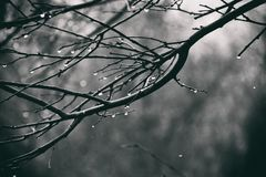 Lonely leafless tree branches with drops of water after a Novem. Beautiful lonely leafless tree branches with drops of water after a November cold rain stock image