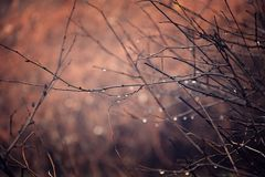 Lonely leafless tree branches with drops of water after a Novem. Beautiful lonely leafless tree branches with drops of water after a November cold rain royalty free stock photo