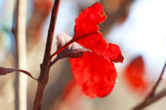 Lonely leaves in winter Stock Photography