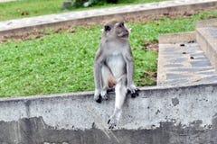 Lonely life of monkeys Stock Image
