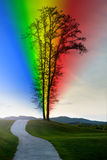 Lonely life with rainbow Royalty Free Stock Photos