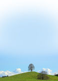 Lonely linden tree at the hilltop, blue gradient sky Royalty Free Stock Image