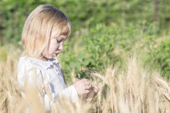 Lonely little girl tearing off wheat spikelets in field in summer royalty free stock photos