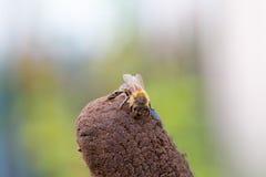 Lonely little honey bee Stock Image