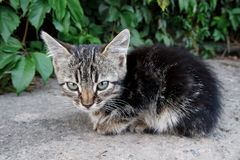 Lonely little kitten in the street Stock Photo