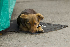 Lonely little puppy. Single small puppy lying on a mat on the street, natural light royalty free stock photo