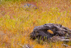 The Lonely Log. I found the remains of this long forgotten tree while hiking in the desert Royalty Free Stock Images