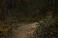 A lonely magic road in the mystery colored autumn forest Royalty Free Stock Photography