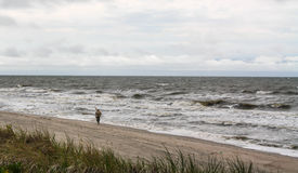 Lonely man on the beach. Amber gathering, stormy weather Stock Photos