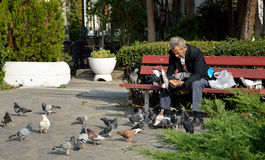 Lonely man feeding pigeons Royalty Free Stock Images