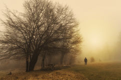 Lonely man in nature. Lonely man in the morning fog Royalty Free Stock Images