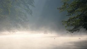 Lonely man with a paddle in the boat swimming on a calm river in dawn fog. The first rays of the morning sun make their. Way through the branches of trees stock video