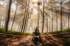 Lonely man in the pine forest with magic of the sunrays and fog at the sunrise part 2 royalty free stock images