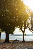 Lonely man sitting between two trees on a bench and looking at the lake. Royalty Free Stock Photos