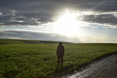 A lonely man stands in a green field at dusk. A photo of a man standing in a field at sunset. Only the shadow outline visible Stock Photo
