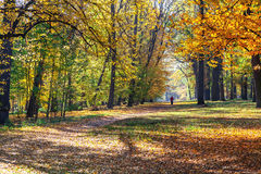 Lonely man walking on forest trail. Autumn walk. Stock Photos
