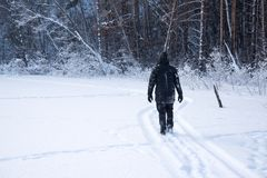 A lonely man walks in the snow. Dramatic silhouette of a man walking in a snowy clearing in the forest. Coldly. A man walking in the snow royalty free stock images