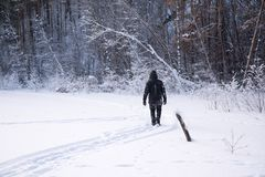 A lonely man walks in the snow. Dramatic silhouette of a man walking in a snowy clearing in the forest. Coldly. A man walking in the snow stock photography
