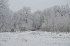 Lonely man in winter forest Royalty Free Stock Photography