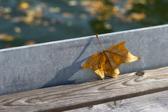 Lonely maple leaf on the pier Stock Photos