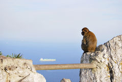 Lonely Monkey Stock Images