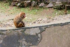 Lonely Monkey Royalty Free Stock Photo