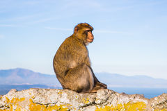 Lonely monkey Stock Photo