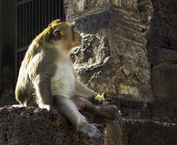 Lonely monkey looking for something Stock Photos