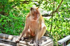 A lonely monkey at the park. Stock Photo