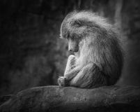 Lonely monkey. A scene which shows a lonely monkey sitting on a cold stone Royalty Free Stock Photos