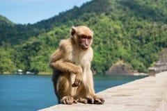 Lonely monkey sitdown on concrete Royalty Free Stock Photo
