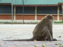 Lonely monkey Stock Photos